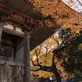 西明寺(1) 二天門と紅葉