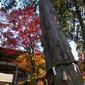 樹齢1000年の夫婦杉 西明寺(6)
