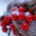 Photos: 雪の中でおしくらまんじゅう