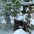 Photos: 今朝の雪