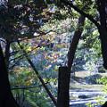 Photos: 兼六園 早春の風景