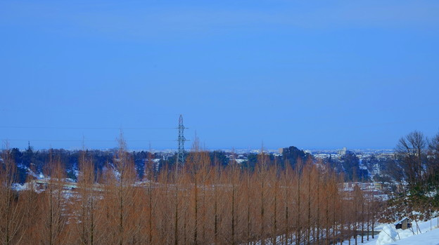 メタセコイアの並木道 青空と雪(2)