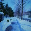 写真: 歩道の雪
