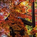 写真: 紅葉狩り