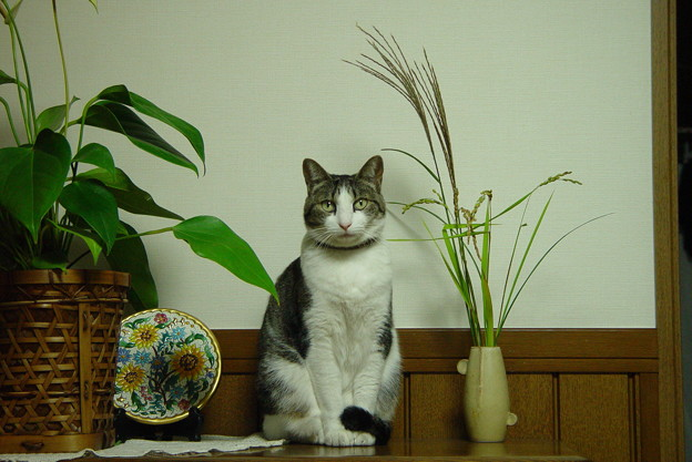 我が家の猫ハナちゃんが死んだ・・・・。
