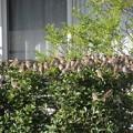 写真: スズメの生る木