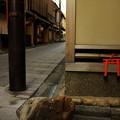 Photos: 神様の通り道