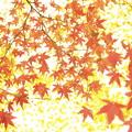 散りばめた秋色