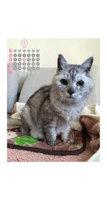 2月スマホ用猫カレンダー