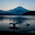 Photos: 白鳥と富士山