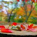 写真: 遊秋