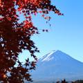 写真: 紅葉と富士