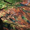 写真: 新宿御苑 紅葉