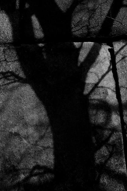 壁面の木陰 2