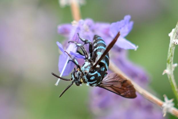 幸せを呼ぶ青い蜂・4