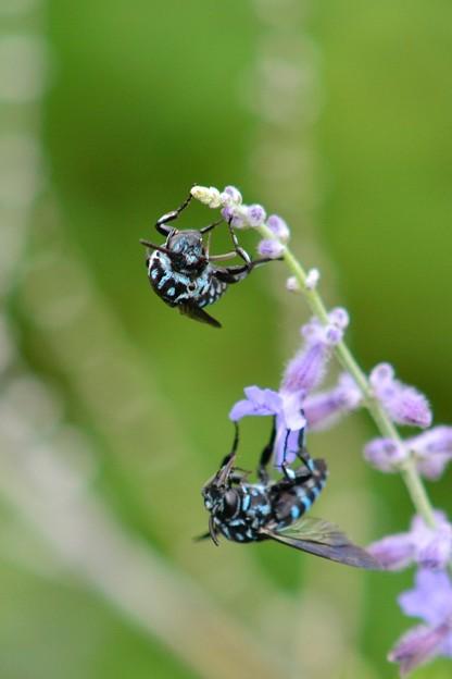 幸せを呼ぶ青い蜂・8