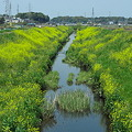 Photos: 川岸の春