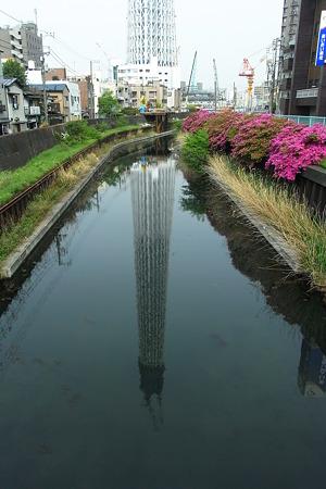 東京カワモツリー