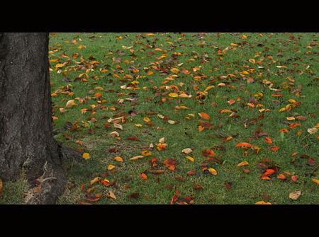 秋を散りばめて