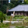 Photos: 秋の庭に思ふ