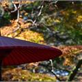写真: 紅葉のこころ