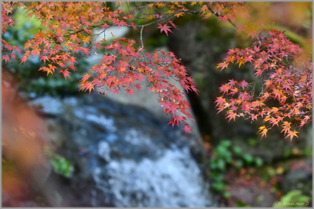 更けゆく秋