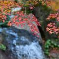 写真: 更けゆく秋