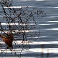 写真: 冬の前触れ