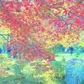 紅葉の向こうの景色が幻のように
