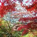 お寺が隠れる程の紅葉