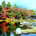 天竜寺庭園の池