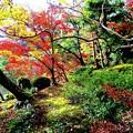 池の辺の林の紅葉