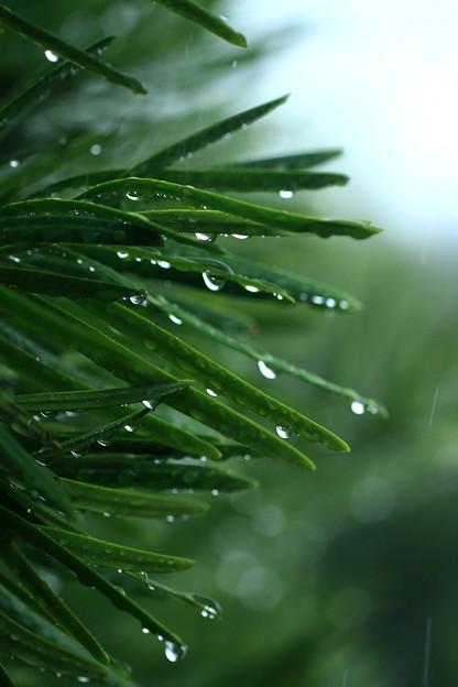 写真: 雨降り!