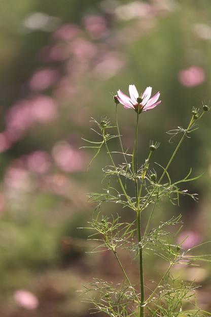 写真: 花 光る