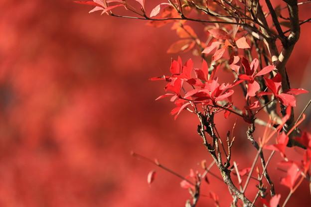写真: 秋を恋う