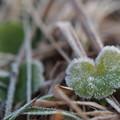 写真: ハート凍らせて
