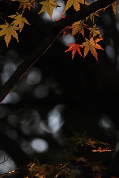 写真: 煌めく星のように