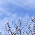 Photos: 大雪の空