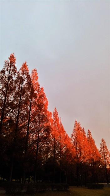 Photos: 紅く紅く