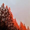 写真: 紅く紅く