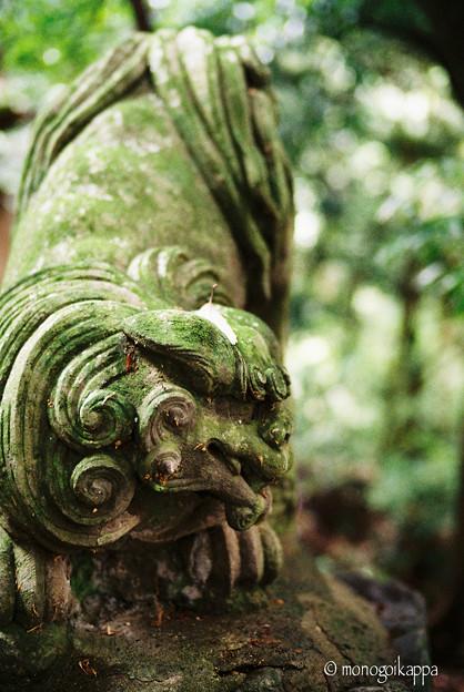 写真: 十二所神社の狛犬_LeicaM6-000024
