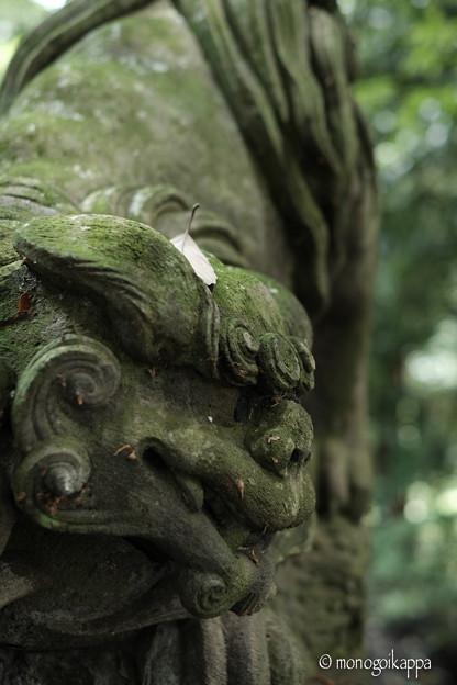 十二所神社の狛犬_X-Pro2-5820