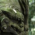 写真: 十二所神社の狛犬_X-Pro2-5820