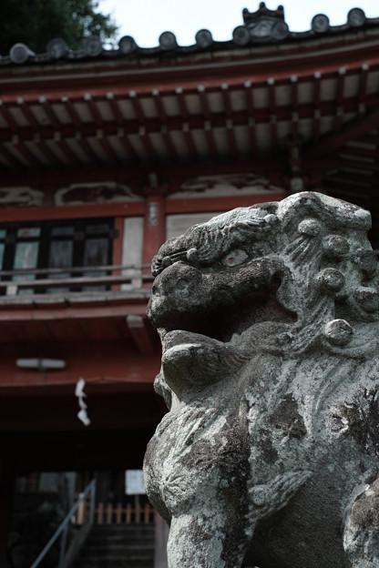 写真: 若宮八幡宮02 _狛犬-6195