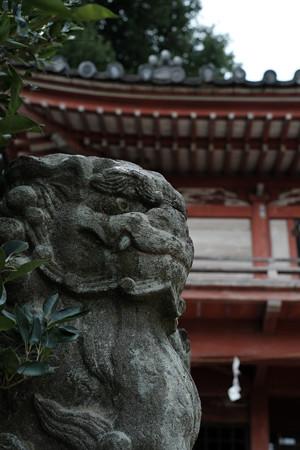 若宮八幡宮02 _狛犬-6197