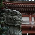 写真: 若宮八幡宮02 _狛犬-6197