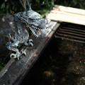 写真: 若宮八幡宮05 _龍-6194