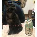写真: 五郎八(いろは)姫と五郎八