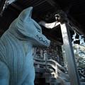 写真: 御嶽神社_12凛々しい大口真神社のおいぬさま-7041