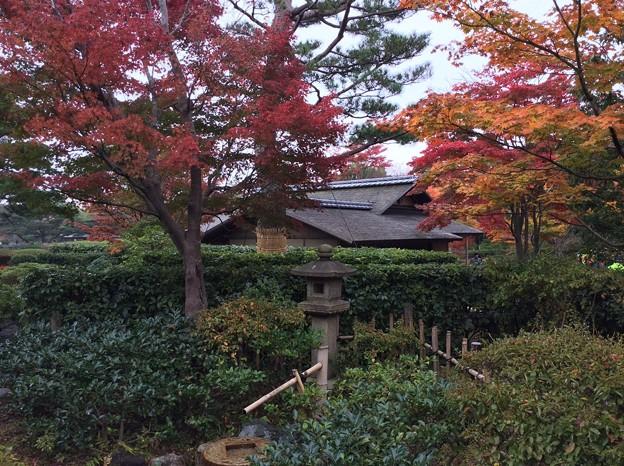11月9日 昭和記念公園 日本庭園紅葉。。?